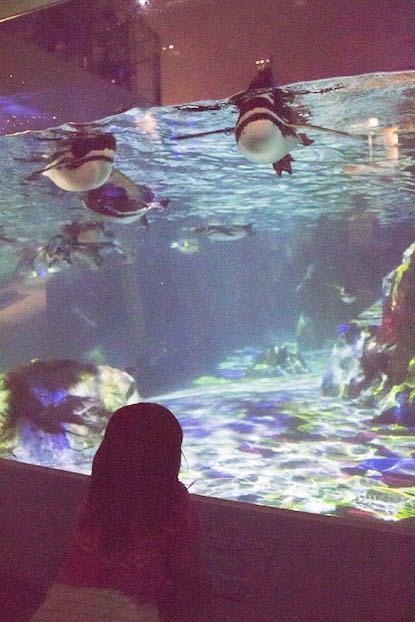ペンギン プロジェクションマッピング