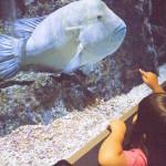 スカイツリー 水族館
